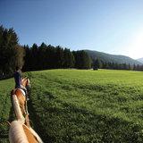 In Südtirol werden die meisten Pferde auf den Hochebenen wie der Seiser Alm oder dem Tschögglberg gehalten - ©Südtirol Marketing/Alessandro Trovati