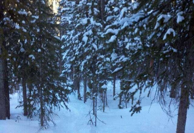 Have to go way in the trees to find any good snow. Ice, ice and more ice.