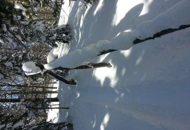 snow good