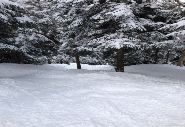 endless snow in shakedown. find your own trail. amazing day.