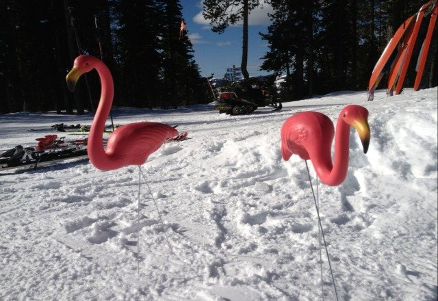 Pink Flamingos are out at Bluewood