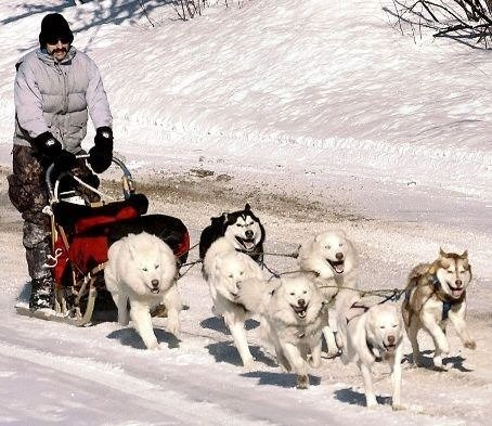 Carving up the mountain my sled team.