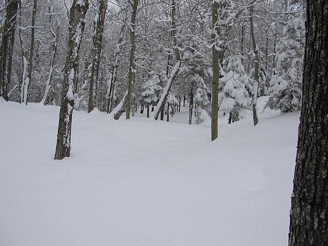 Backcountry powder at Ragged Mountain, New Hampshire