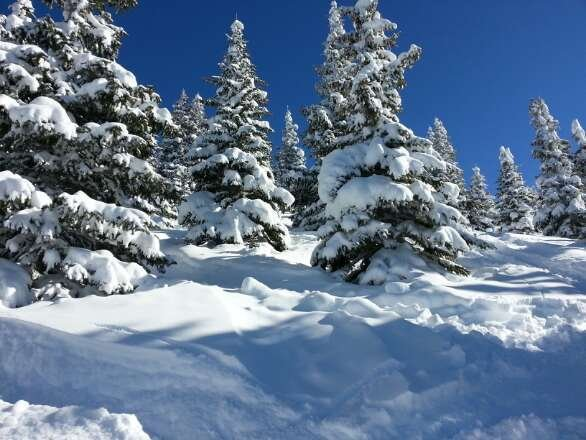 sunday still great snow in the trees. soft bumbs and sun. perfect!