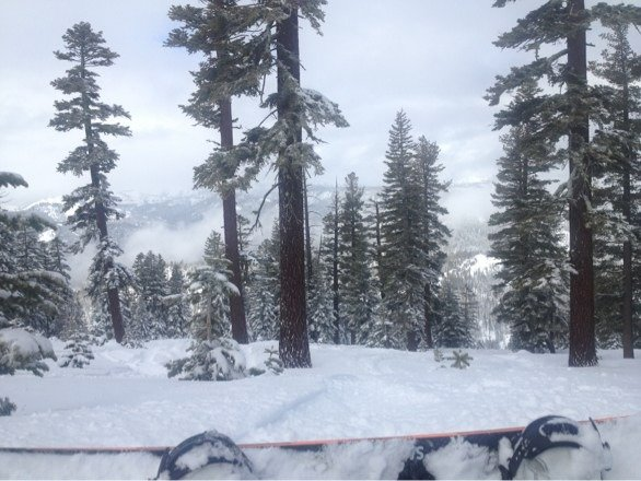 The tree runs were incredible. Nice powder up top, a little heavier near the bottom. Overall great day.