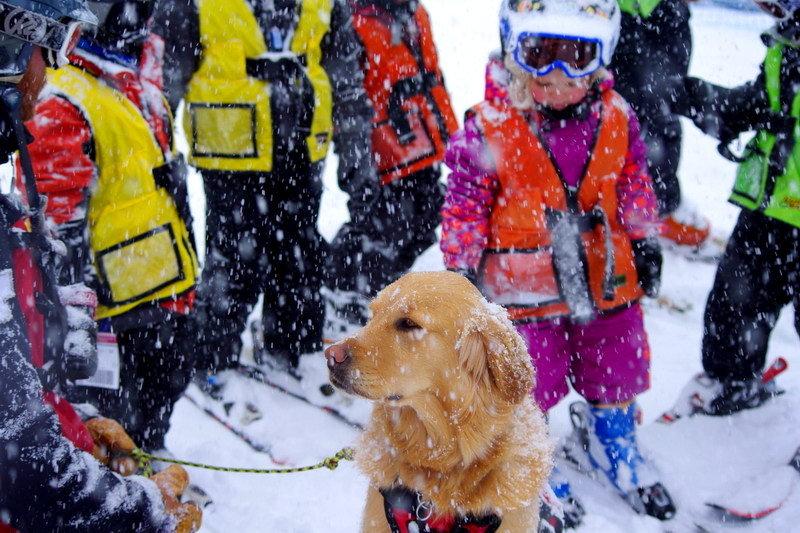 Rio is the Avalanche Dog at Arapahoe Basin. - ©Photo courtesy Arapahoe Basin Ski Area.