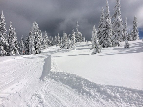 Lots of powder to be found all over both hills from the recent snow falls. Definitley a hill to check out. 2 small hills but lots of trails and most of them are not groomed and full of powder