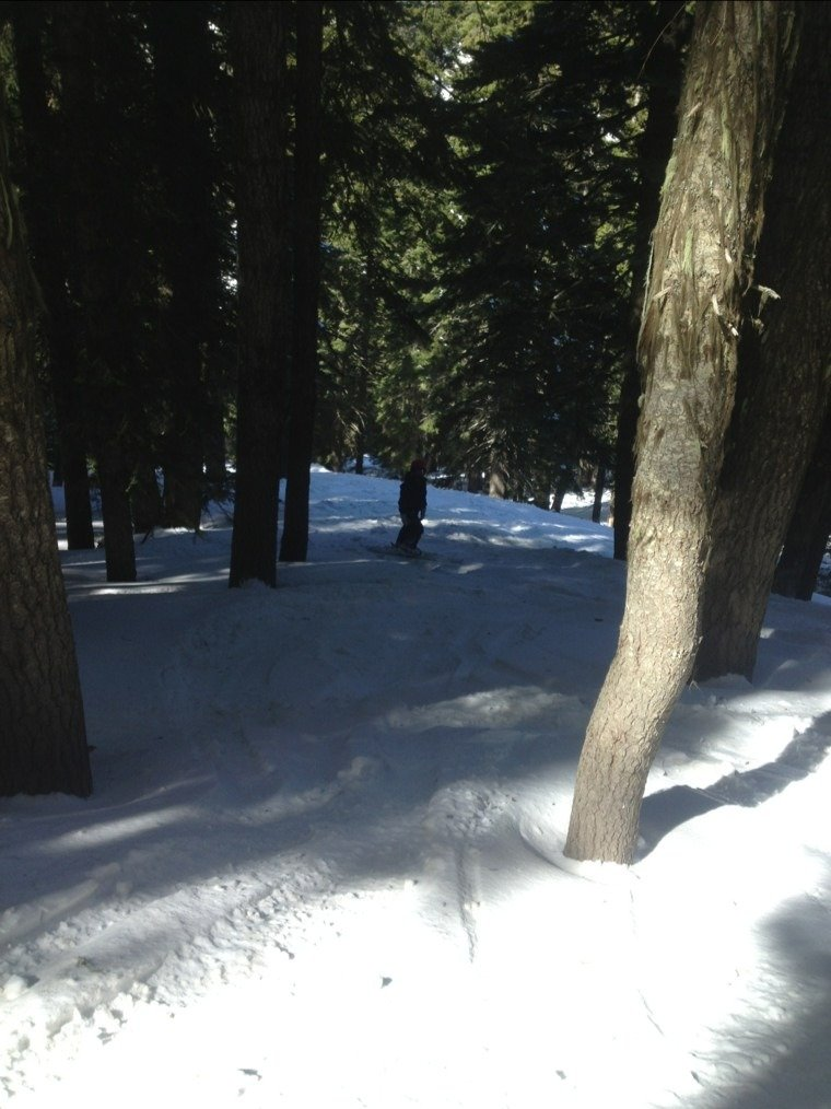 sweet trees...an awesome day of great groomed runs and exceptional powder