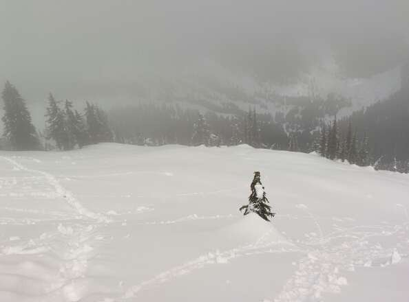 an hour hike out rooster cone will get you soft untouched snow. this is where you should go