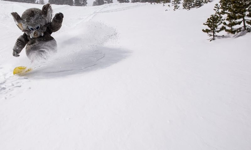 Woolly enjoys the late-season powder at Mammoth. - ©Mammoth Mountain