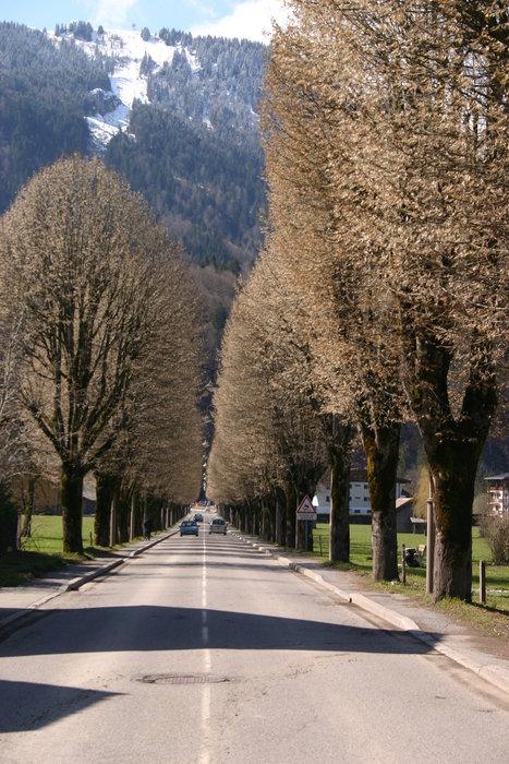 Avenue - ©Sal @ Skiinfo Lounge