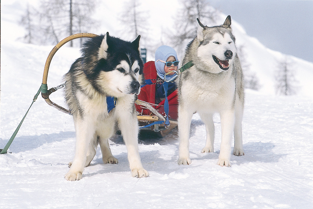 Dogsledding in Tauplitz.