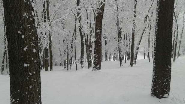 Finally, real snow! Great day skiing the trees and under the lifts. Get out and enjoy while conditions are good.
