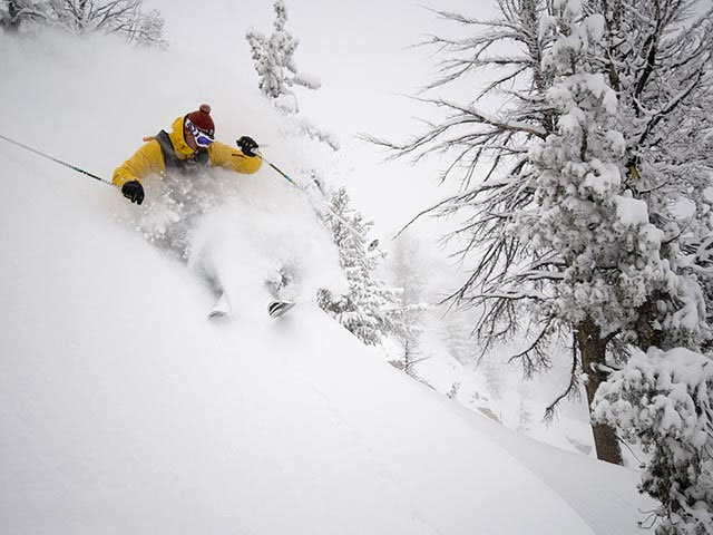 A skier avoids the trees in the backcountry of Jackson Hole, Wyoming