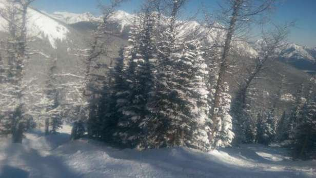 Nakiska Ski Area - decent glades now! fresh snow and a good enough base if you love the trees is beautiful.