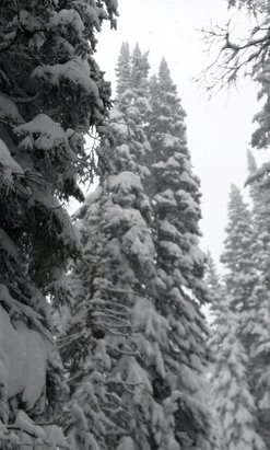 Steamboat - 2-3  feet at the top.  still snowing. days like today are the reason we ski. totally unbelievable!