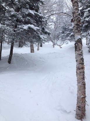 Jay Peak - Great day today.  Especially the glades!   - ©Geoffs Iphone