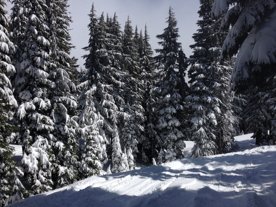 Mt. Hood Meadows - Great snow!