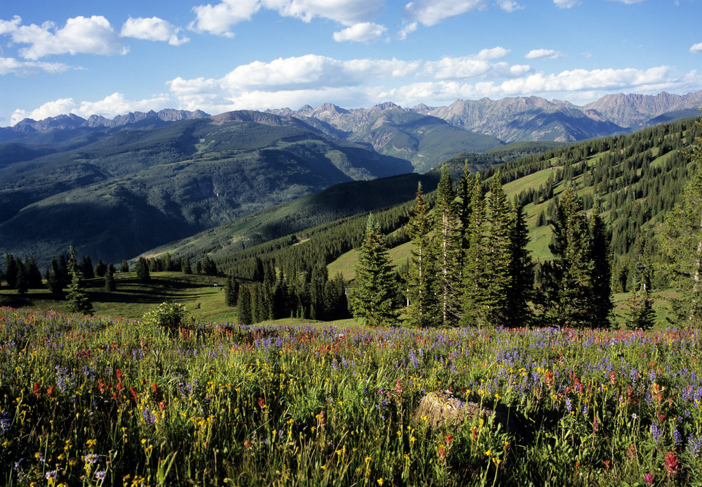 Scenic wildflowers up at Snag Park on Vail Mountain.