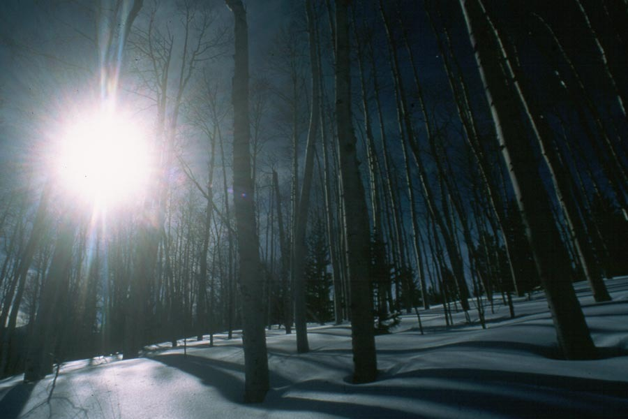 Aspen trees in the winter in Taos, NM. Image by Larry Turner.