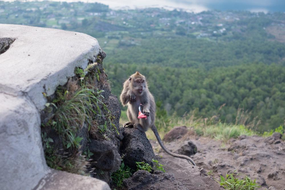 Auf seine Sachen sollte man in Gegenwart von Affen stets ein Auge haben - ©Sebastian Lindemeyer