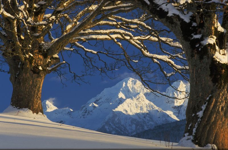A view through the trees of Schladming, AUT