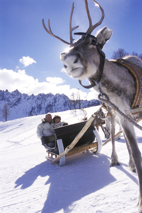 Reindeer sled at Hochpustertal/Pusteria, Italy.