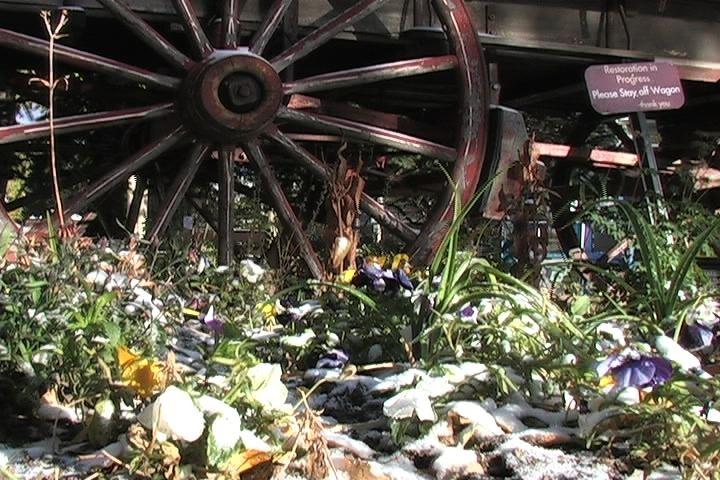 Flowers surround a wagon wheel in Breckenridge, Colorado