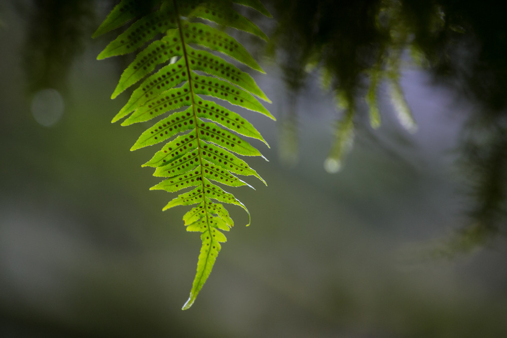 Coming down off the mountain leads you deep into the temperate rain forest - ©Liam Doran