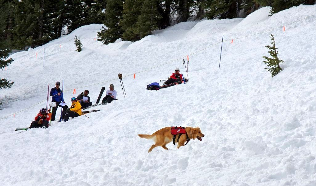 Rio is an avalanche dog at A-Basin.