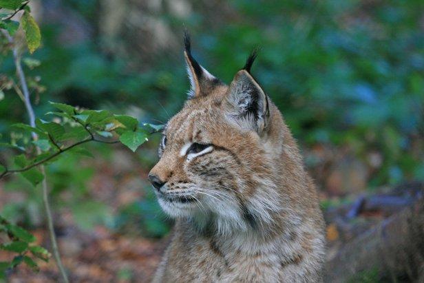 Zes keer wildleven in Duitsland - ©Siegfried Richter