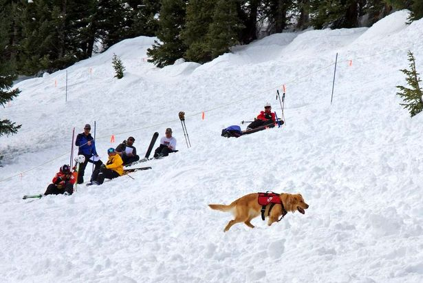 Rio, the avalanche dog at A-Basin - ©Photo courtesy Arapahoe Basin.