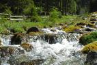 Wandertipp Rauris: Vom Urwald ins Quellparadies