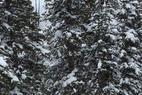 Snowbird - Great day on the bird  - Snowbird - Great day