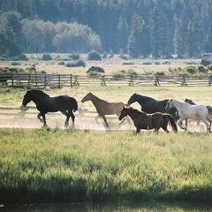 Vista Verde horses