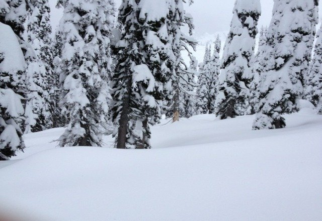 sick powder up top. and its coming down steadily  sickgnar