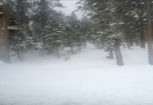 16 inches of untouched pow in the trees. unbelievable conditions.