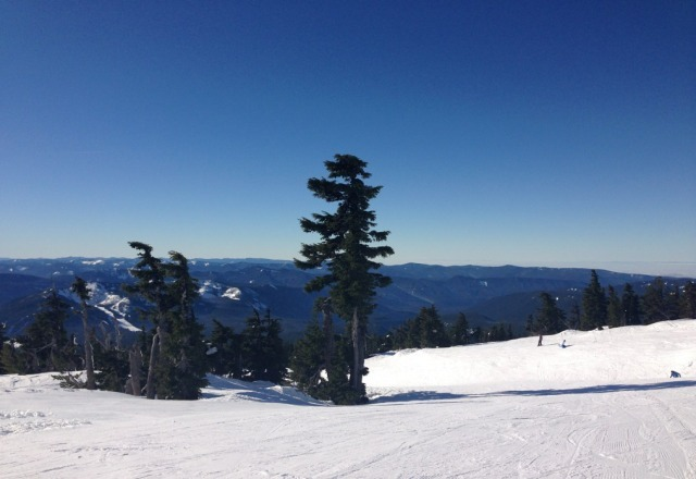 wow. almost 50 degrees and bluebird. like spring snow.