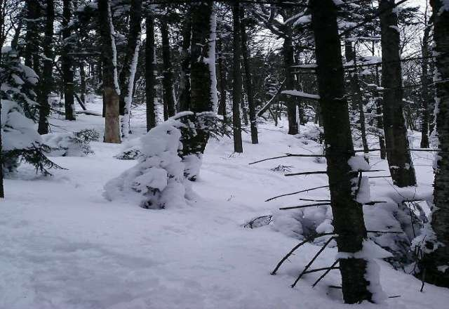 Excellent conditions today with tons of untouched snow still in the woods.