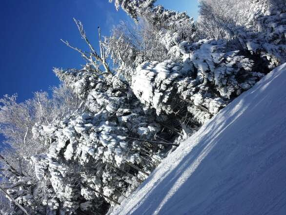 just left there today was amazing! 5 inch my a$s more like 15 but was about all packed in by the time we left.... everything should be open by the weekend tho everything was covered... I poached all the blacks..