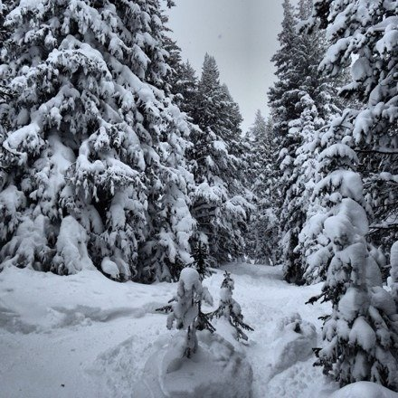 Today was off the hook! So much powder everywhere! Knee to waist high powder in the trees off of Pete's Lift in Blue Sky.