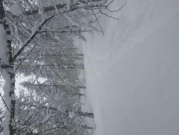 neve spettacolare..... piste da freeride.... bosco stupendo!!!! giornata spettacolosa!!!