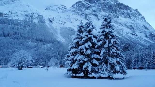 20 cm de neige aujourd'hui ...