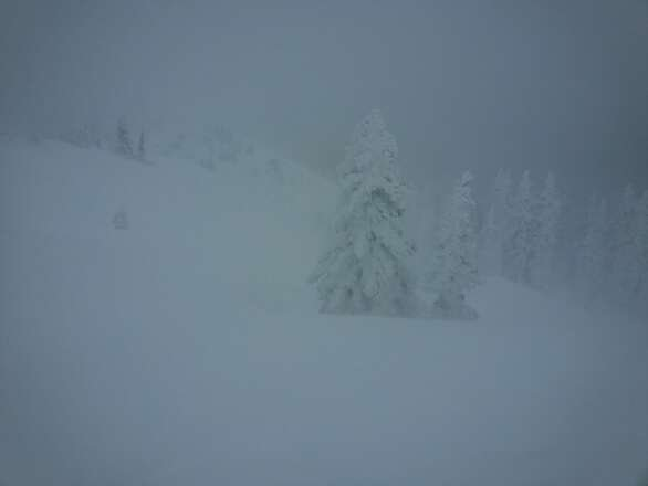 sick effing day! snow up to your waist in most places. trees mostly untouched. I <3 monarch!