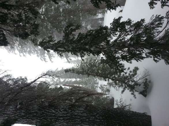 New Sierra cement over night.  Still snowing hard.  Windy, the top is closed, but the trees are fantastic.