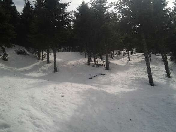 Spring snow and tons of it. Unreal coverage even in the glades.