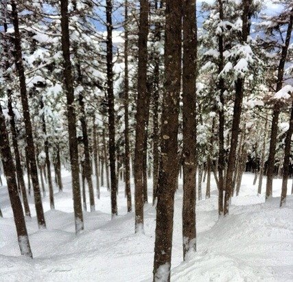 Great skiing in the Casablanca glades! The tree skiing is broken in, and they are looking great.  Other trails which look good are blue devil, tri color, golden smelt, and royal coachman.