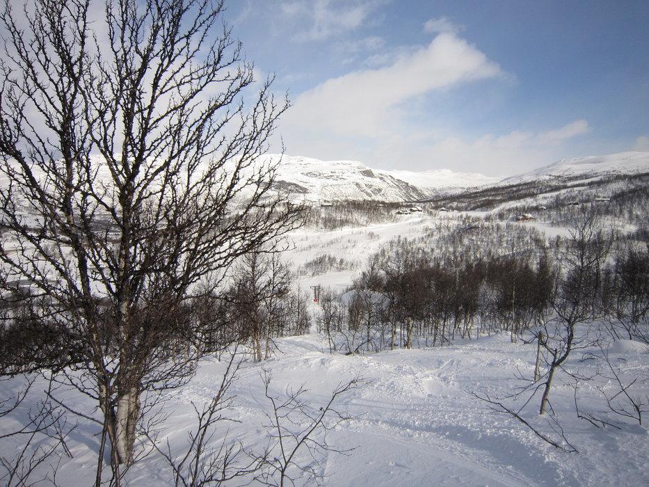 Filefjell skogkjøring - © moi | FrodOhm @ Skiinfo Lounge