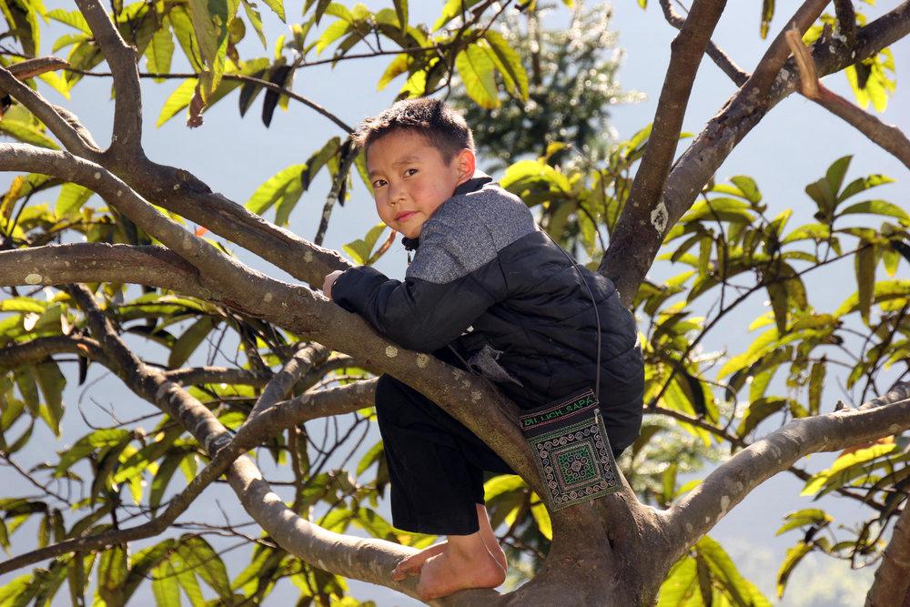 Ein Junge klettert in einem Baum umher und genießt das gute Wetter in der Bergwelt des Hoang-Lien-Son - © Karsten-T. Raab