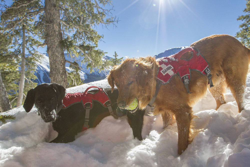 "Danin and Cara taking ""fetch"" to extremes. - © Taos Ski Valley"